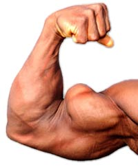 biceps exercises for mass and tone