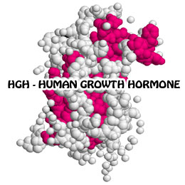 human growth hormone hgh
